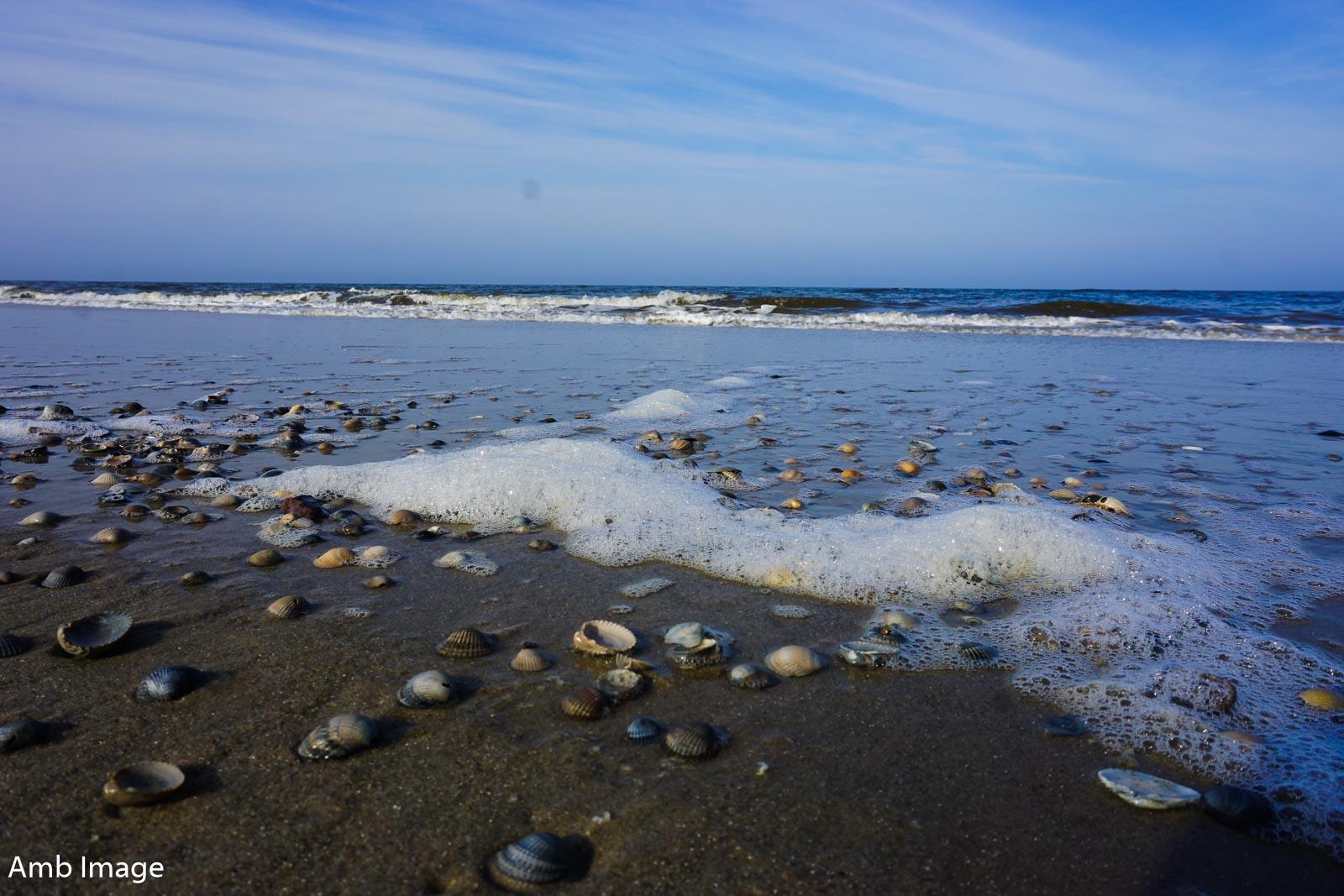 Welle mit Muscheln